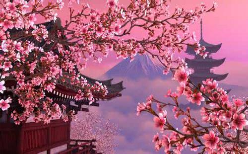怎么从大阪到奈良 奈良大阪的樱花开了吗