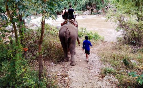 清迈旅行可以看见大象吗