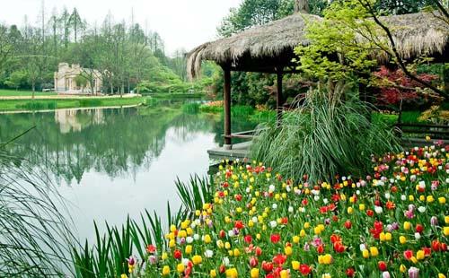 杭州太子湾三月份可以看哪些花+花期+最佳路线