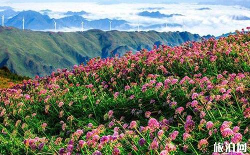 贵州花海图片 贵州看花的地方介绍
