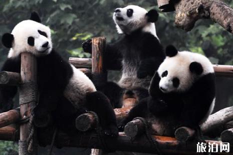 熊猫基地观光车坐多久 熊猫基地观光车票多少钱