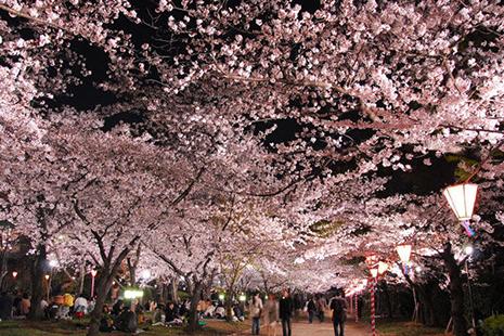 2019日本樱花季是什么时候 哪里赏樱花好