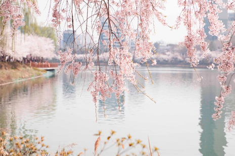 三月去韩国哪里赏花 韩国春季踏青地点推荐