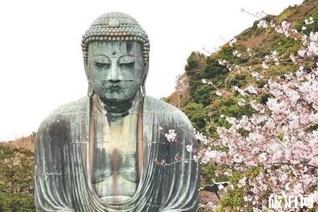 日本神奈川的樱花+富士山的樱花+日本东北地区樱花介绍