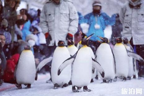 旭山动物园企鹅散步时间 旭山动物园门票+在哪里+介绍
