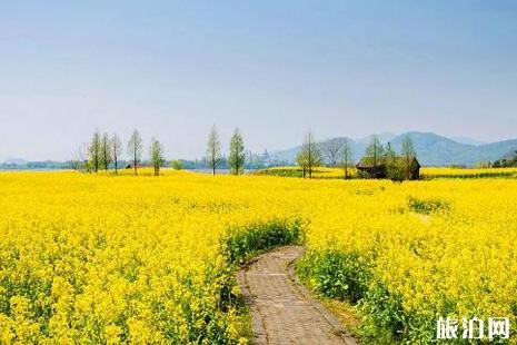 杭州周边看油菜花的地方推荐+攻略