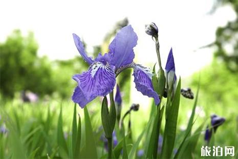 4月佛山哪里赏花