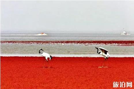 红海滩国家风景廊道开放时间 红海滩国家风景廊道攻略