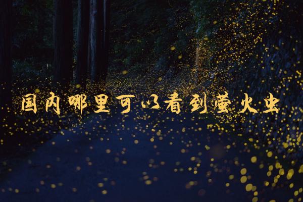 国内哪里可以看到萤火虫 萤火虫在哪里可以看到