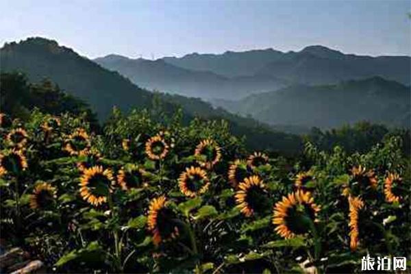 杭州向日葵花海在哪里