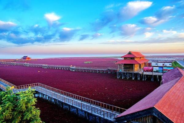 盘锦红海滩几月去最好 盘锦红海滩景点推荐