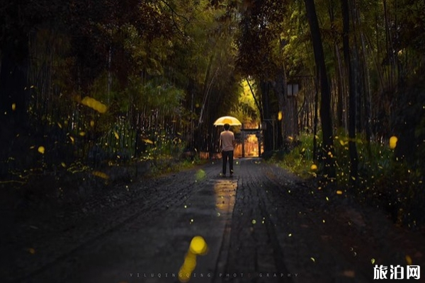 杭州哪里可以看萤火虫