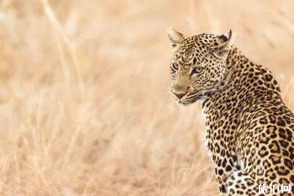 南非旅游景点介绍