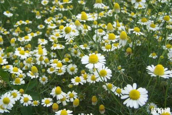 蔚然花海秋季有哪些花