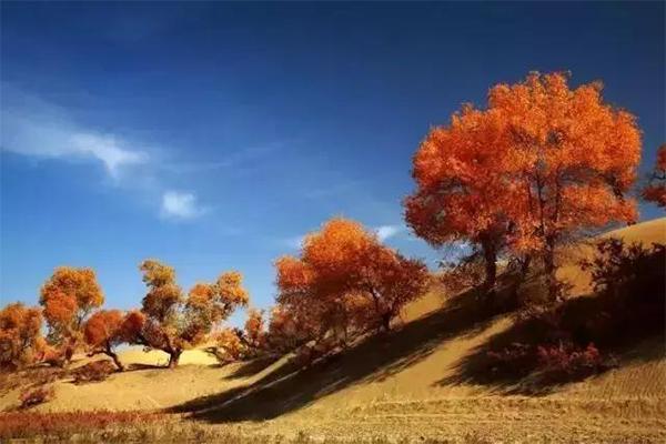 新疆有哪些秋季绝美胡杨林