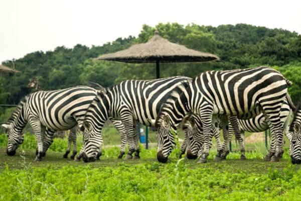 沈阳森林动物园门票多少钱 沈阳森林动物园怎么去