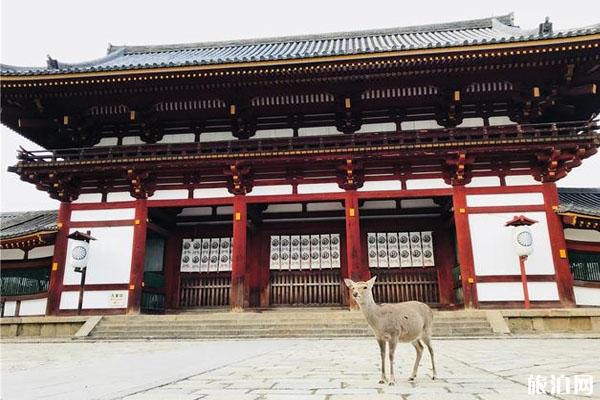奈良公园游玩路线+景点介绍
