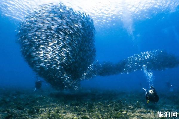 塞班岛潜水地点推荐