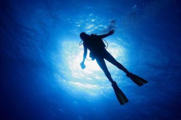 潜水为什么不能摸海洋生物