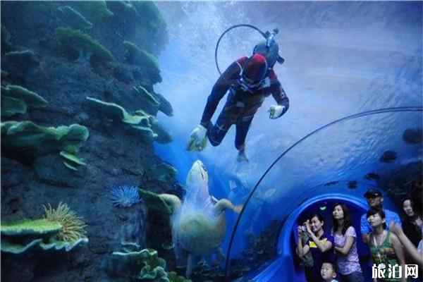 合肥汉海极地海洋世界怎么样 汉海极地海洋世界介绍-游玩项目有哪些