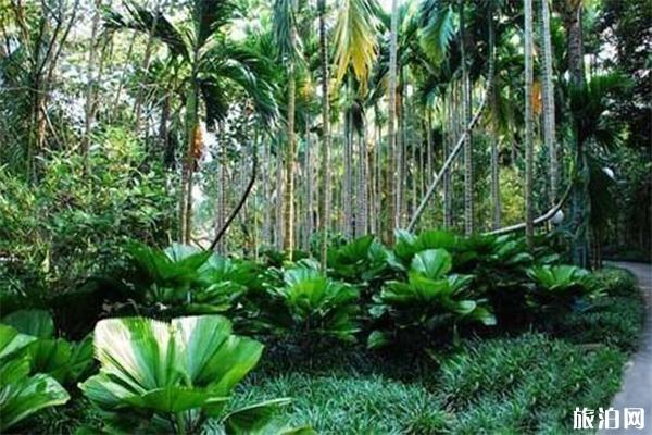 2020海南热带植物园游玩攻略 海南热带植物园地址天气景点介绍