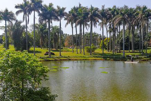 2021儋州热带植物园旅游攻略 儋州热带植物园门票交通及地址