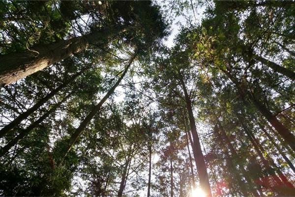 2021万州大垭口森林公园怎么去-门票-天气预报及游玩攻略